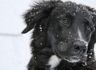 How to protect your pets from the cold, Details