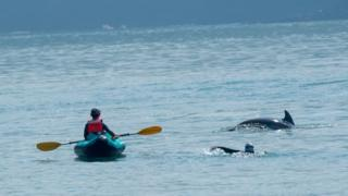Photograph taken of the incident: A man on a kayak and a woman swimming with dolphins