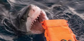 Shark proof wetsuit material could help save lives, Says New Study