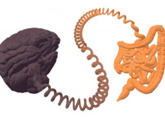 Study: Nerve finding unravels gut mysteries