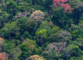 Researchers identify a temperature tipping point for tropical forests