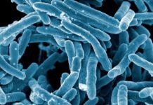 Scientists develop software to find drug-resistant bacteria
