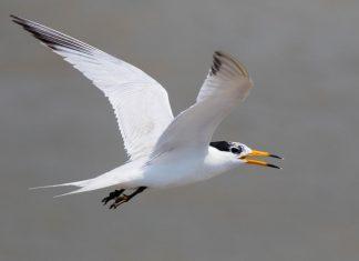 Scientists part of international effort to save critically endangered seabird