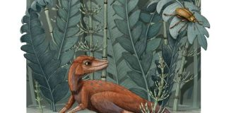 Study: A tiny ancient relative of dinosaurs and pterosaurs discovered