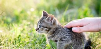 Study: Care for cats? So did people along the Silk Road more than 1,000 years ago
