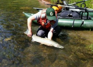 Study: Eavesdropping on trout building their nests