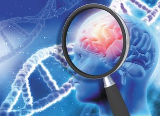 Study: Genes, cardiovascular health each factor into dementia risk