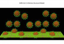 Study: Re-engineering antibodies for COVID-19