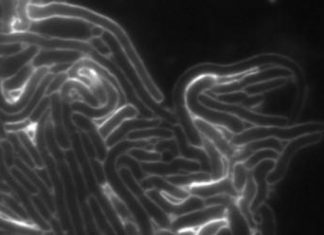 Scientists discover a novel family of toxins used in bacterial competition