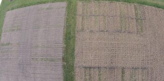 Study: Choosing the right cover crop to protect the soil