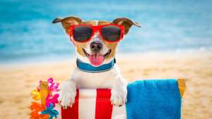 Hot weather pic - dog in sunglasses