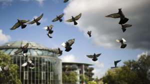 a flock of seagulls flying in the air: Local MPs Gather Support For A Second Referendum Two Years After The Brexit Vote