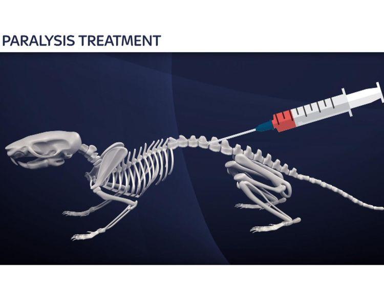 Rat paralysis treatment