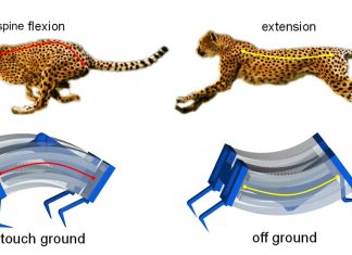 Inspired By Cheetahs, Scientists Build Fastest Soft Robots Yet
