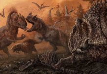 New research finds cannibalism in predatory dinosaurs