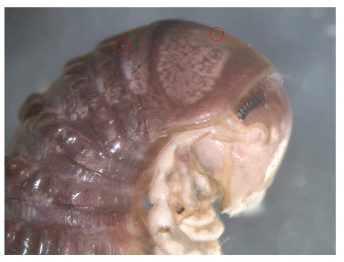Study: Bizarre new species discovered... on Twitter