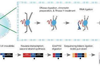 Study: New technology will show how RNA regulates gene activity