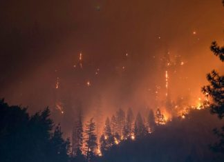 Study: Self-powered alarm fights forest fires, monitors environment