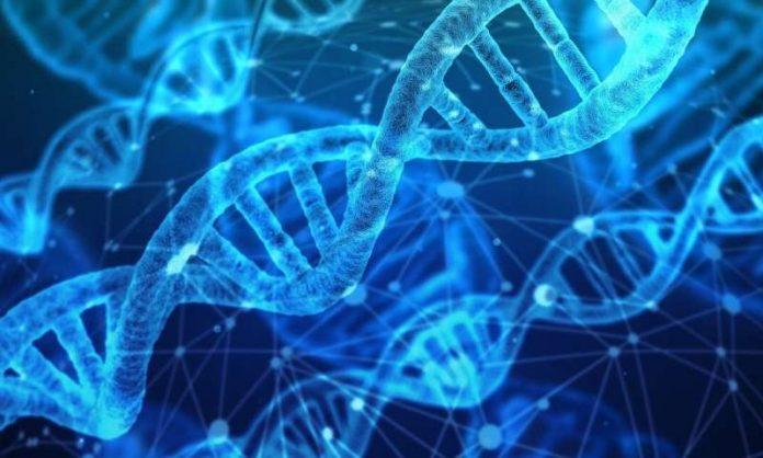Scientists design artificial genes to sense cellular responses to drugs