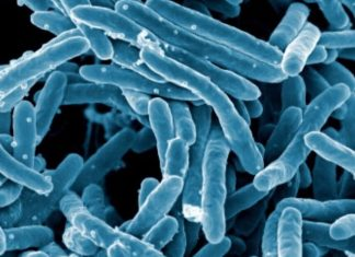 Scientists develop software to find drug-resistant bacteria