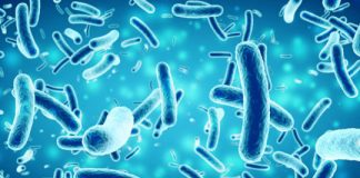 Study: Driving bacteria to produce potential antibiotic, antiparasitic compounds