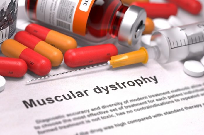 Researchers uncover a novel approach to treating Duchenne muscular dystrophy