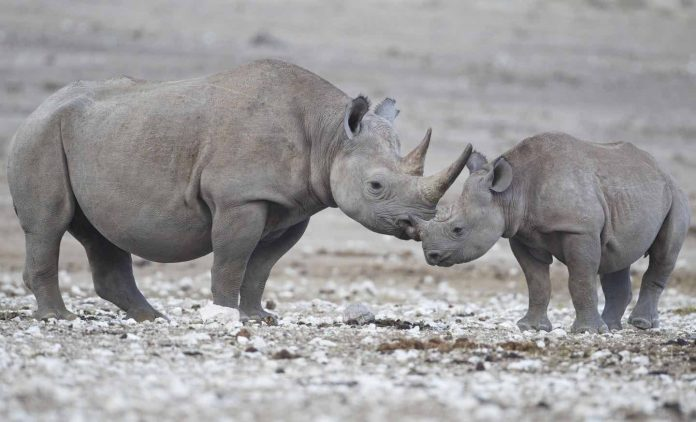 Study: New tracking technology will help fight rhino poaching in Namibia