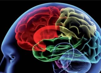 Study: TRESK regulates brain to track time using sunlight as its cue