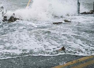 Scientists To Address Chemical Pollution Following Gulf Coast Storms