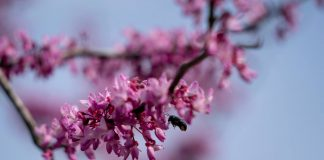 Plant A Pollinator Garden To Supply Food Sources After Freeze, says new research