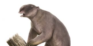 Study: Megafauna extinction mystery – size isn't everything