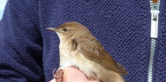 Research: A bird rare to the UK ruffles feathers at the University of York