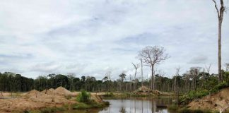 Scientists investigate mining-related deforestation in the Amazon